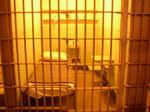 Alcatraz07172004 (7).jpg