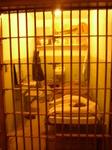 Alcatraz07172004 (20).jpg