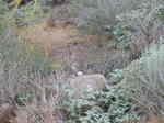 Carrizo Plain N.M (6).jpg